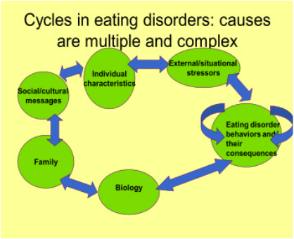 Eating Disorders And The Media Essay